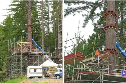 treehouseconstruction